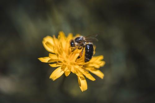 Безкоштовне стокове фото на тему «#yellow, Бджола, бджолиний віск, життя»