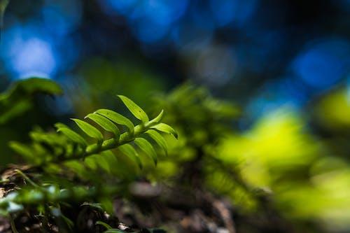 Безкоштовне стокове фото на тему «зелений, кольори, ліс, макрофотографія»