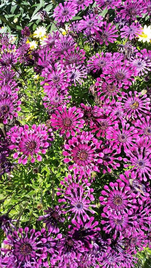 Free stock photo of australia, flower, flowers
