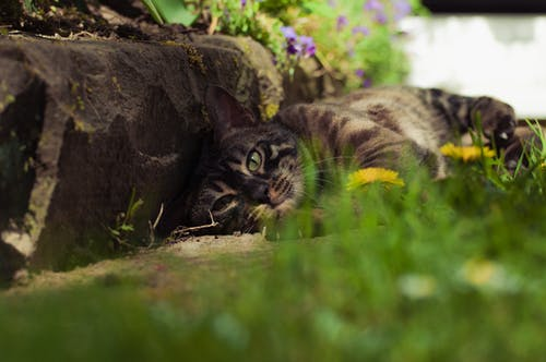 Free stock photo of animal photography, animals, beautiful, beautiful eyes