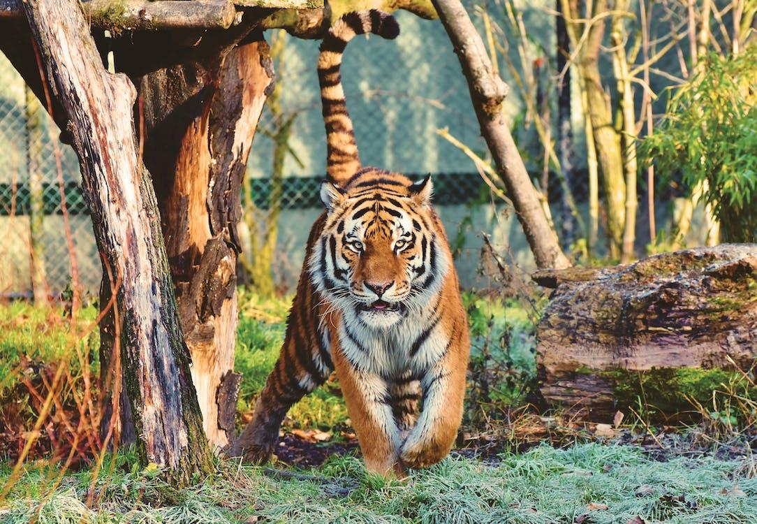 binatang, fauna, fotografi binatang