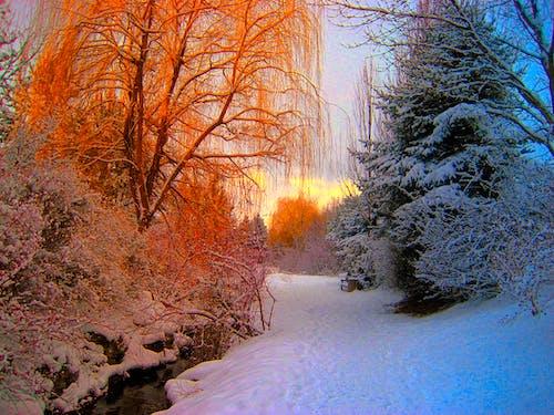 Оранжевый и синий и белый снежный лес