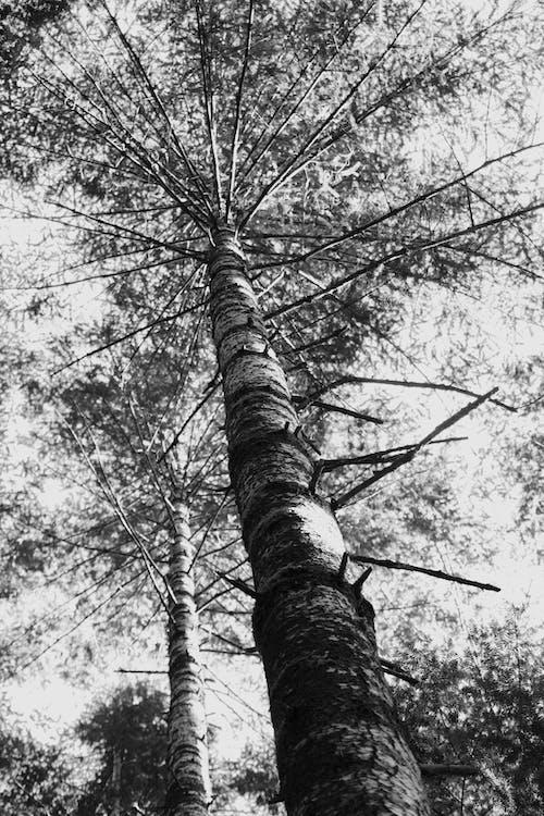 Ilmainen kuvapankkikuva tunnisteilla haukkuminen, katsoa ylös, luonto, metsä