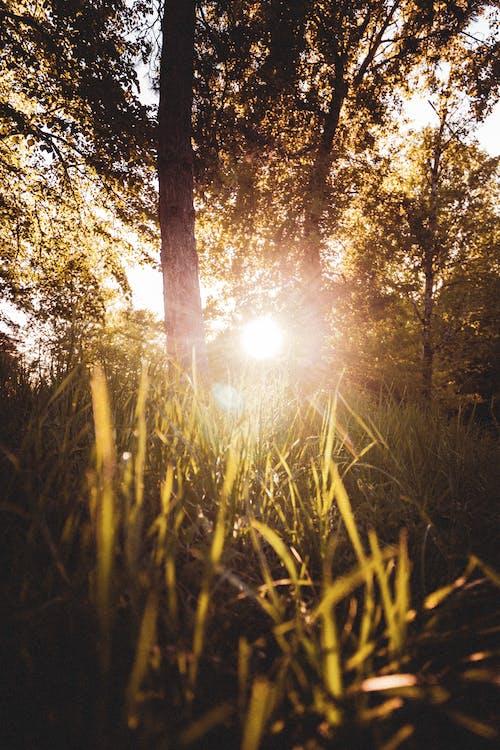 Foto profissional grátis de grama, pôr do sol, sol