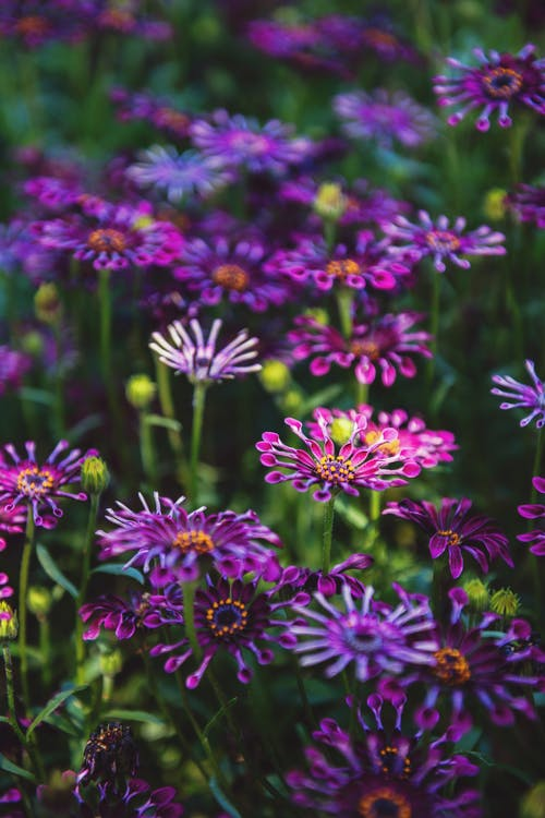 充滿活力, 增長, 明亮, 植物群 的 免费素材照片