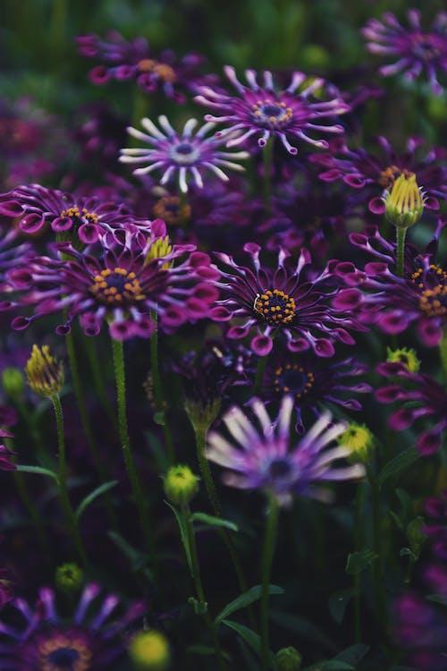 Foto d'estoc gratuïta de flors, molla, natura