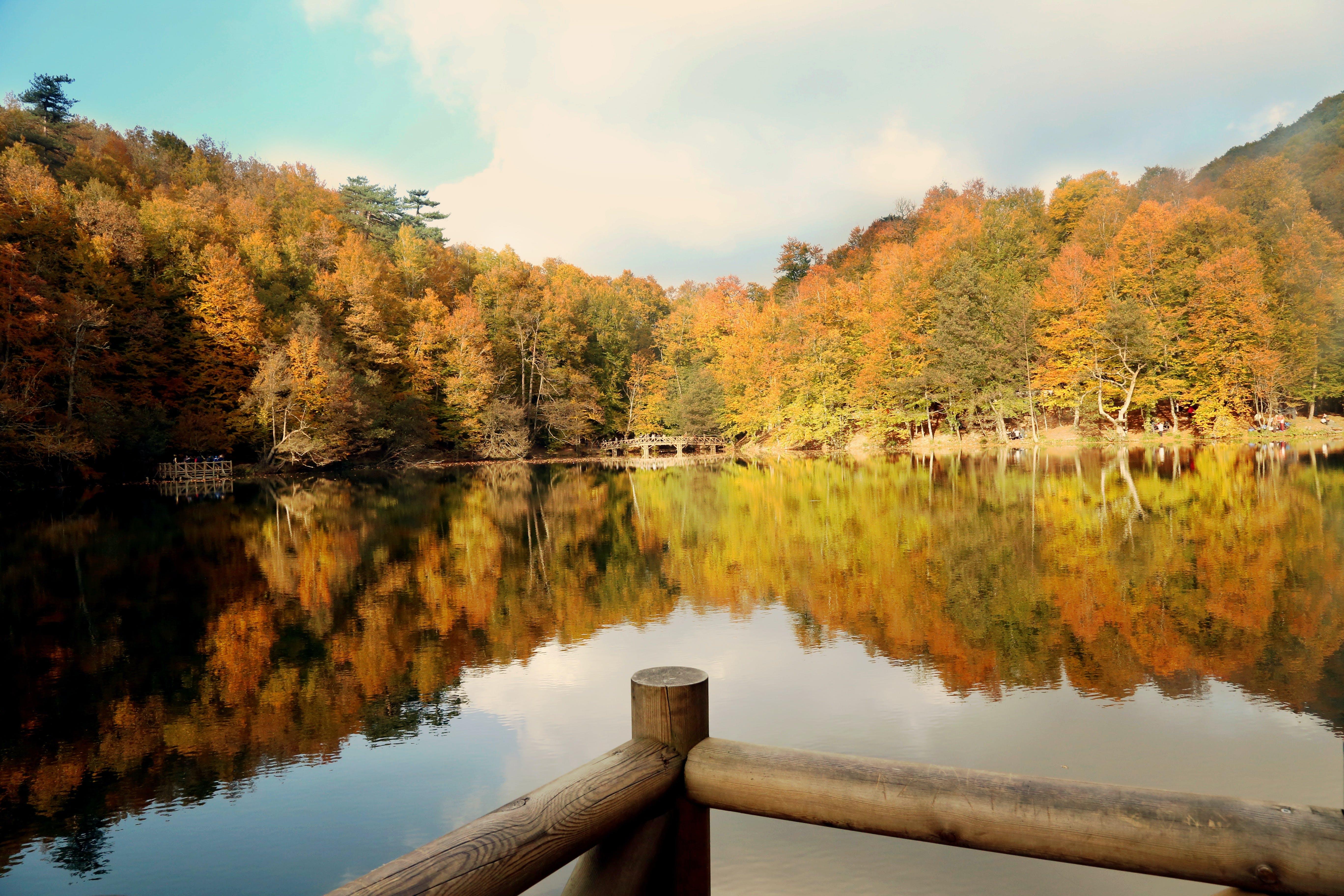 Free stock photo of fall, natural, nature
