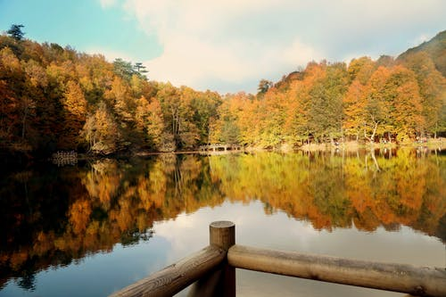 Gratis lagerfoto af efterår, natur, naturlig