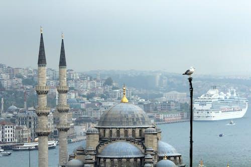 Immagine gratuita di moschea, uccello