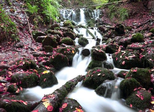 Gratis lagerfoto af blad, flod