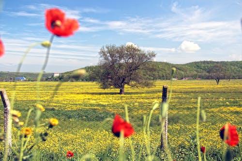 Immagine gratuita di natura, naturale, rosso