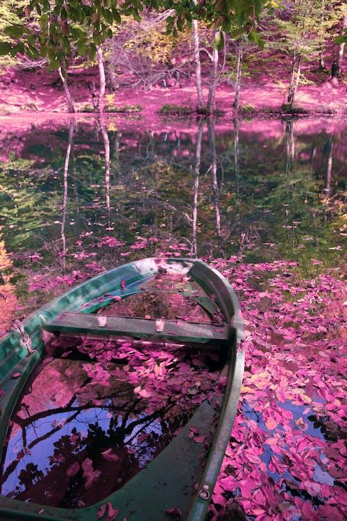Gratis lagerfoto af lyserød, natur, naturlig
