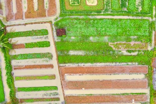 Kostnadsfri bild av åkermark, antenn, bondgård, design