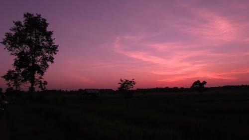 Siluet Pohon Saat Matahari Terbenam