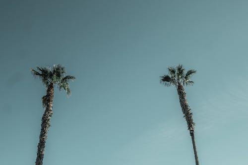 Gratis lagerfoto af dagslys, himmel, kokostræer, lavvinkelskud