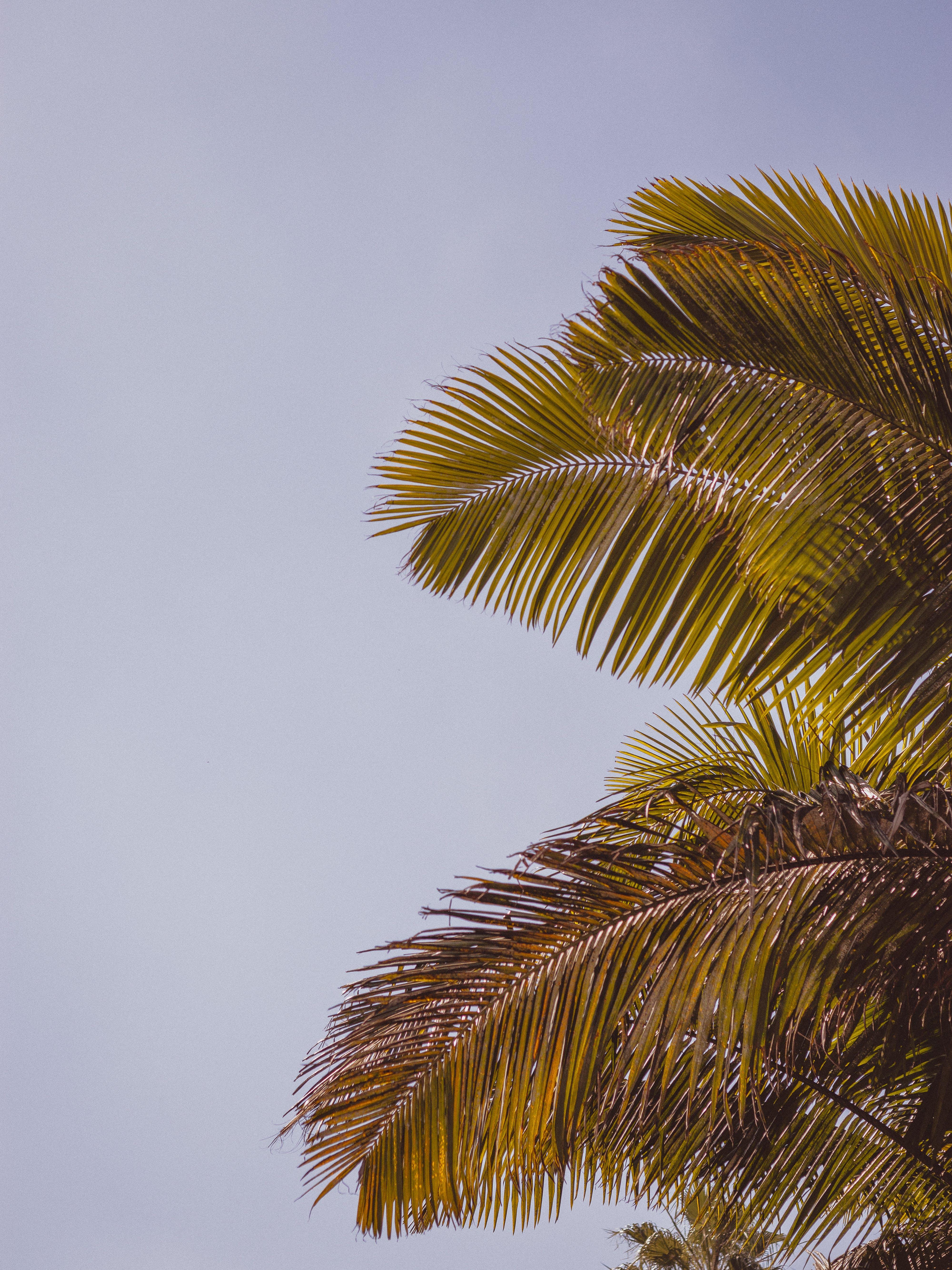 Foto stok gratis Daun-daun, di luar rumah, firdaus, hari