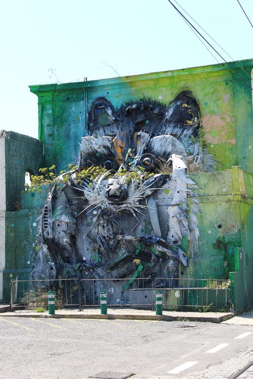 Gray Raccoon Painted on Wall of Concrete Building
