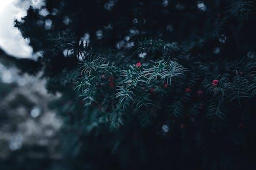 ダーク, ムーディー, 影, 松の木の無料の写真素材