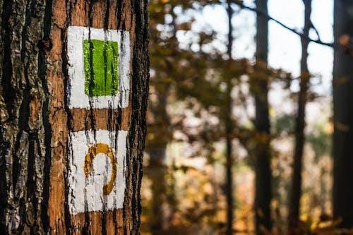 Foto d'estoc gratuïta de arbres, art, bagul, borrós