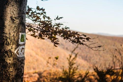 Foto stok gratis alam, batang pohon, berbayang, berfokus
