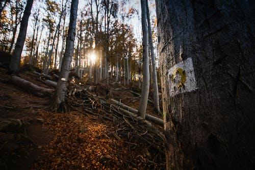 Imagine de stoc gratuită din apreciază, arbore, arbori, Budapesta