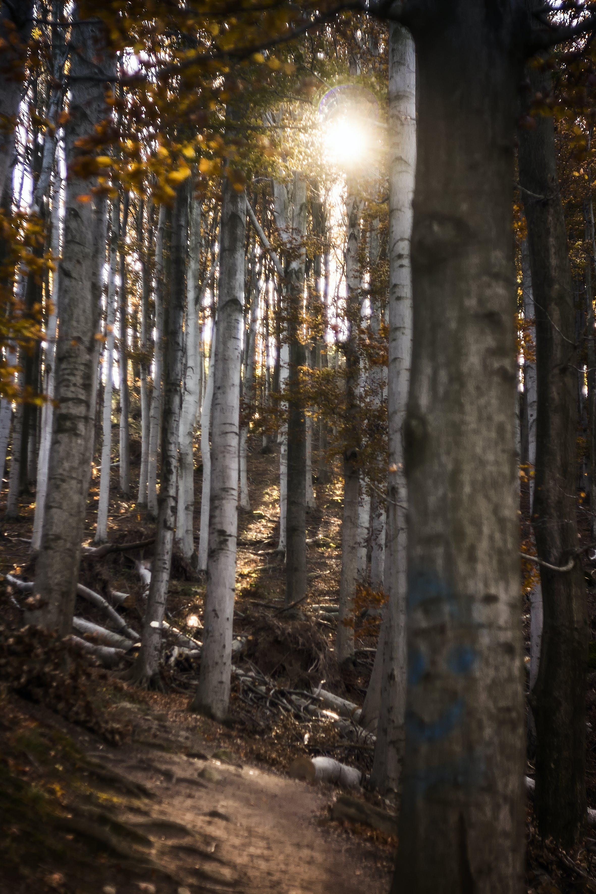 Free stock photo of autumn colours, autumn leaf, autumn leaves, autumn mood forest
