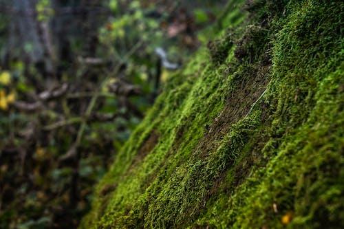 Foto d'estoc gratuïta de arbre, arbres, bellesa