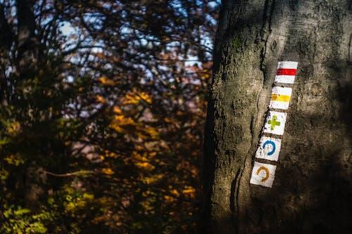 Foto profissional grátis de ao ar livre, árvores, casca de árvore, colocar
