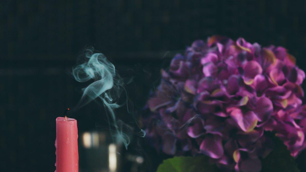 bó hoa, cận cảnh, cánh hoa