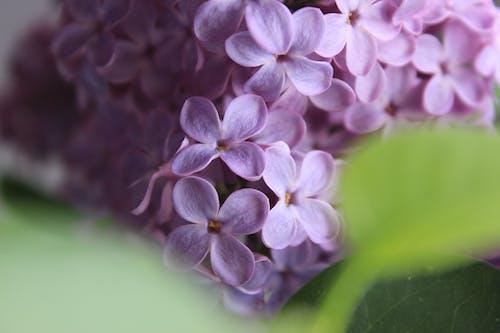 Darmowe zdjęcie z galerii z flora, jasny, kolor, kwiat