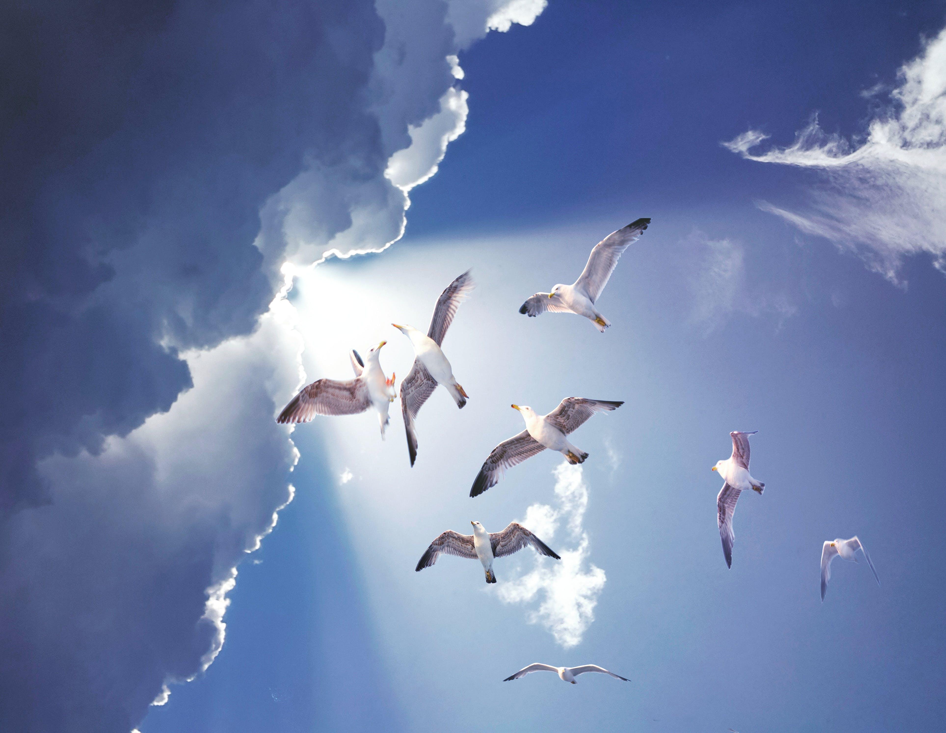 Kostenloses Stock Foto zu bearbeitet, blauer himmel, draußen, federn