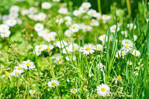 Foto d'estoc gratuïta de #spring