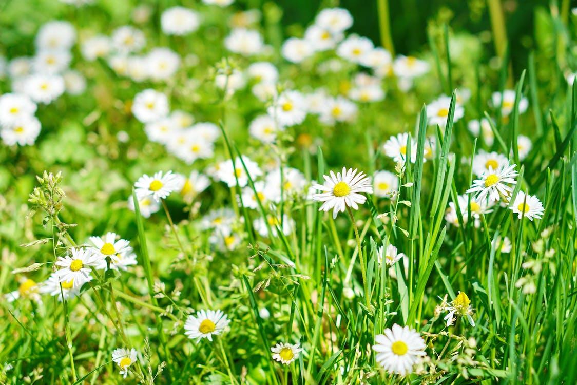 #musim semi