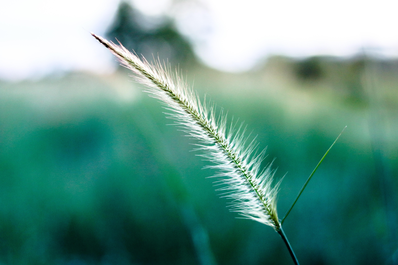 Free stock photo of beautiful, blur, bright