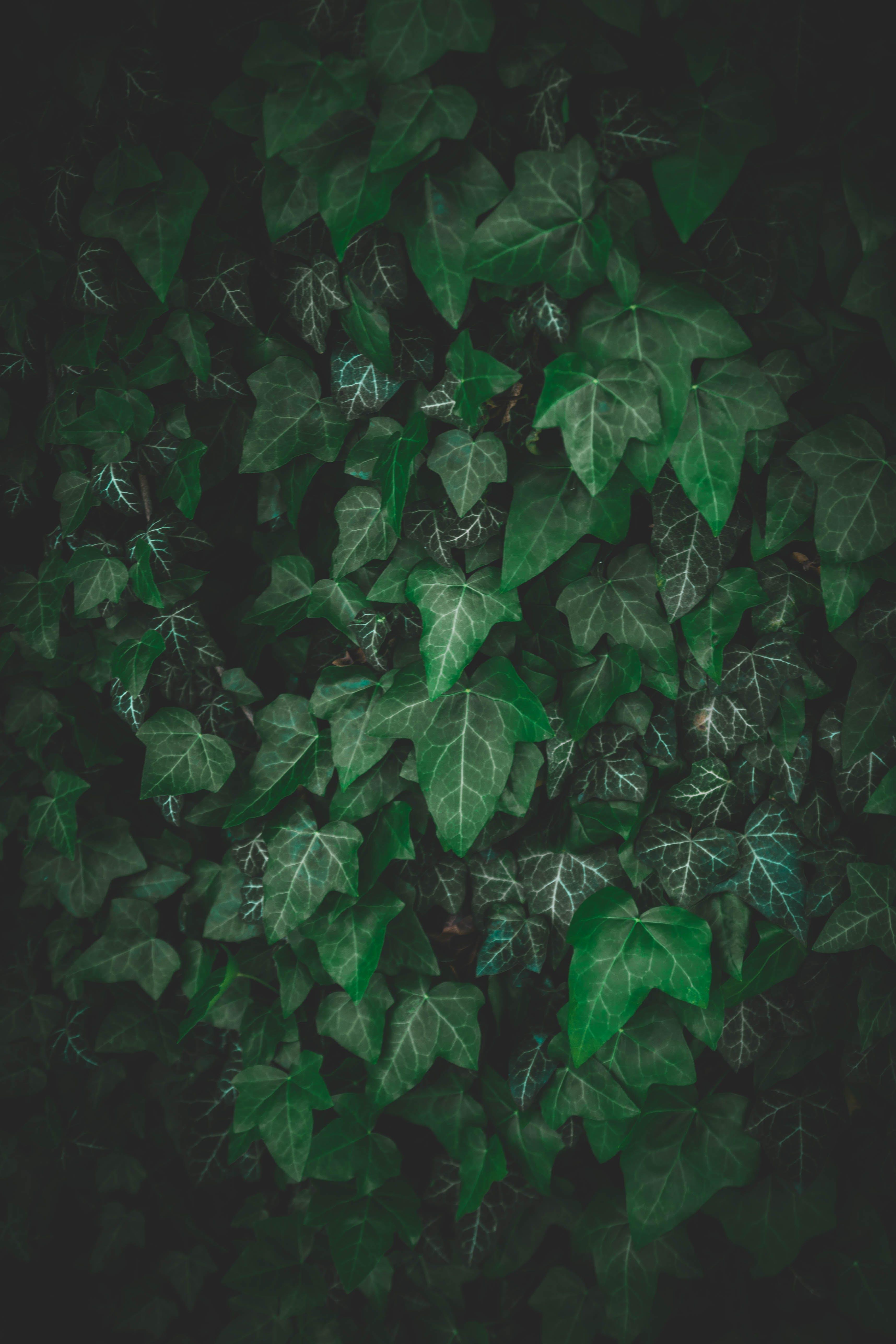 ツタ, 工場, 成長, 環境の無料の写真素材