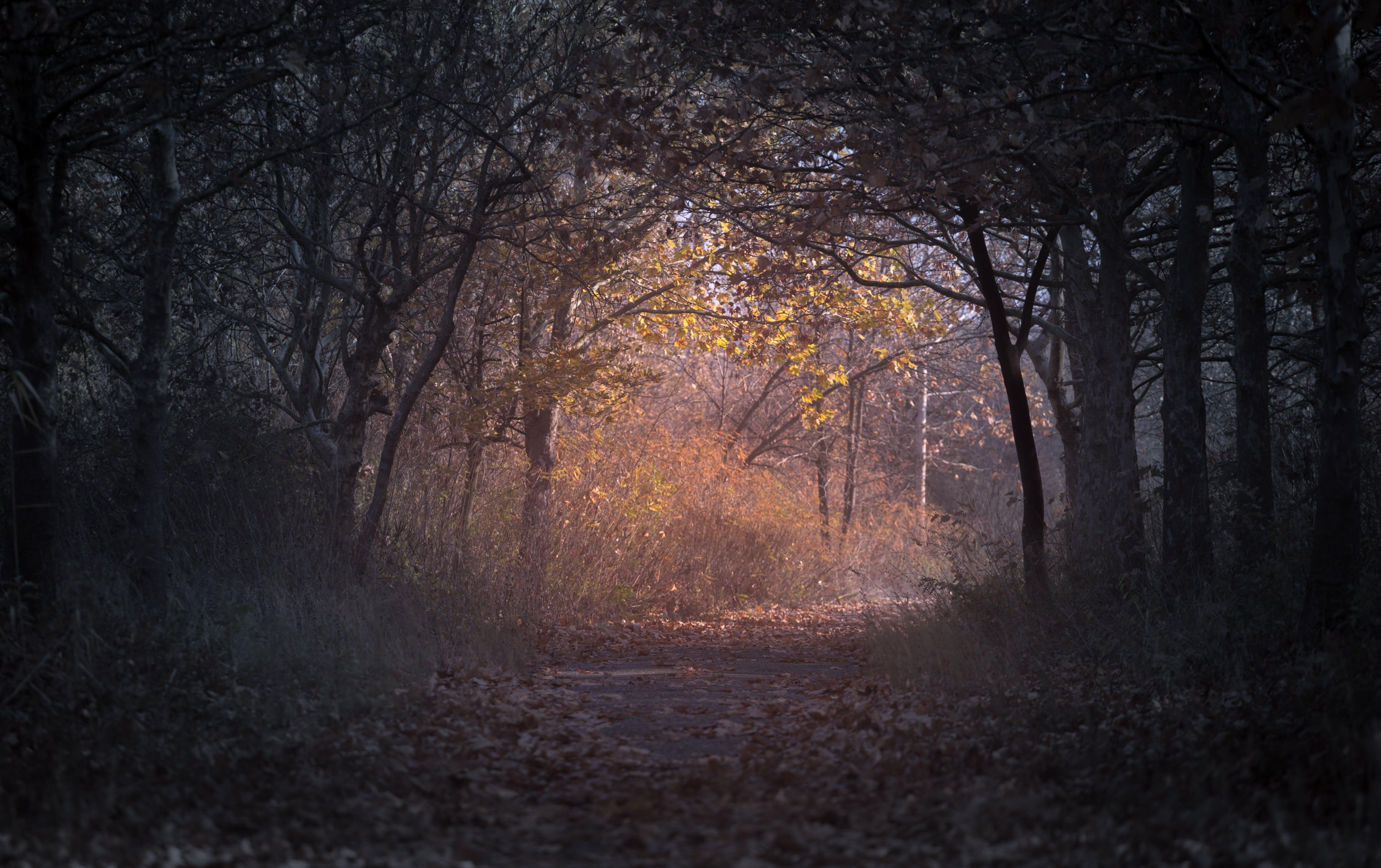 Kostenloses Stock Foto zu ast, bäume, dunkel, getrocknete blätter