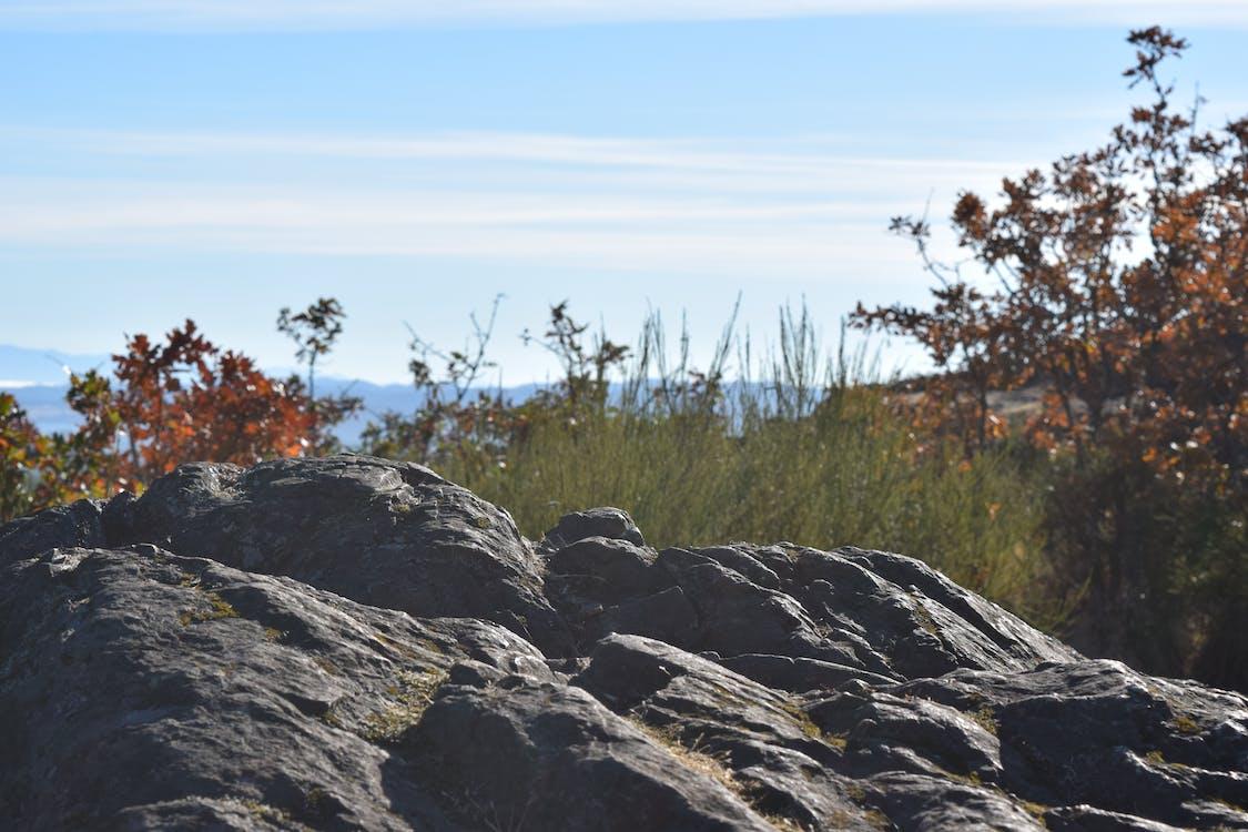 Gray Rock Formation Beside Green Tall Grass