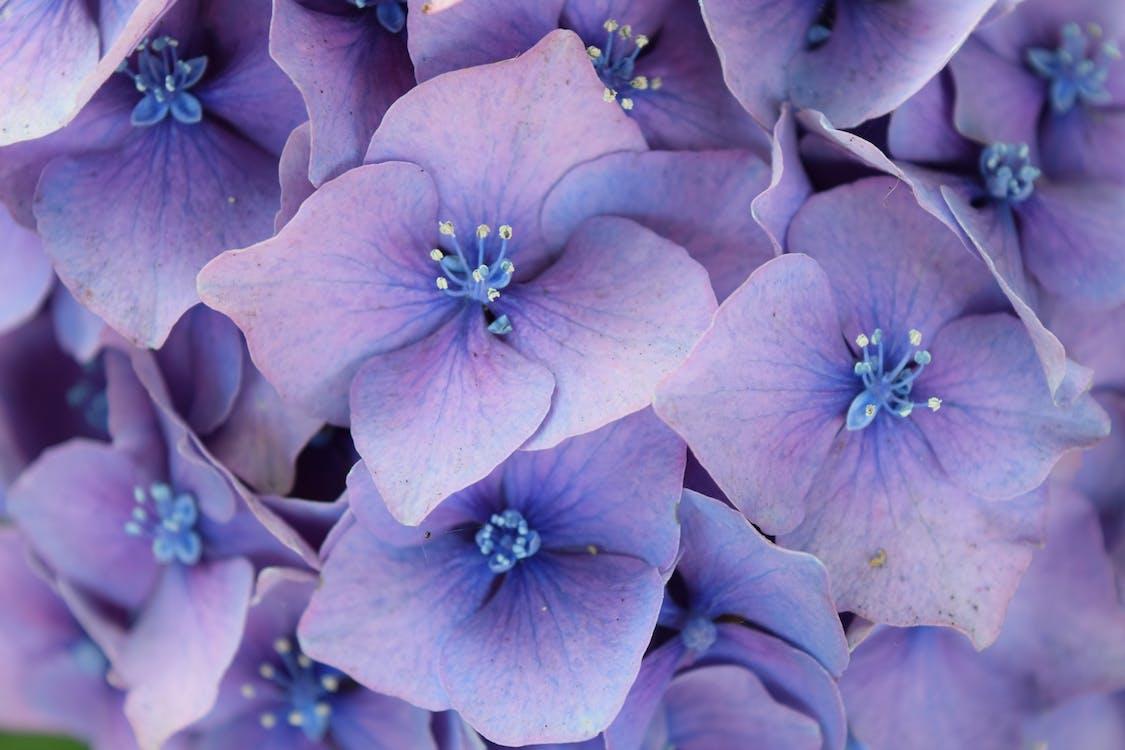 floral, flower, flowers