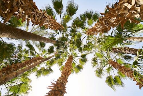 Δωρεάν στοκ φωτογραφιών με γραφικός, δέντρα, εξωτικός, λήψη από χαμηλή γωνία