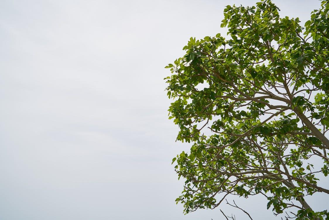 가지, 계절, 나무
