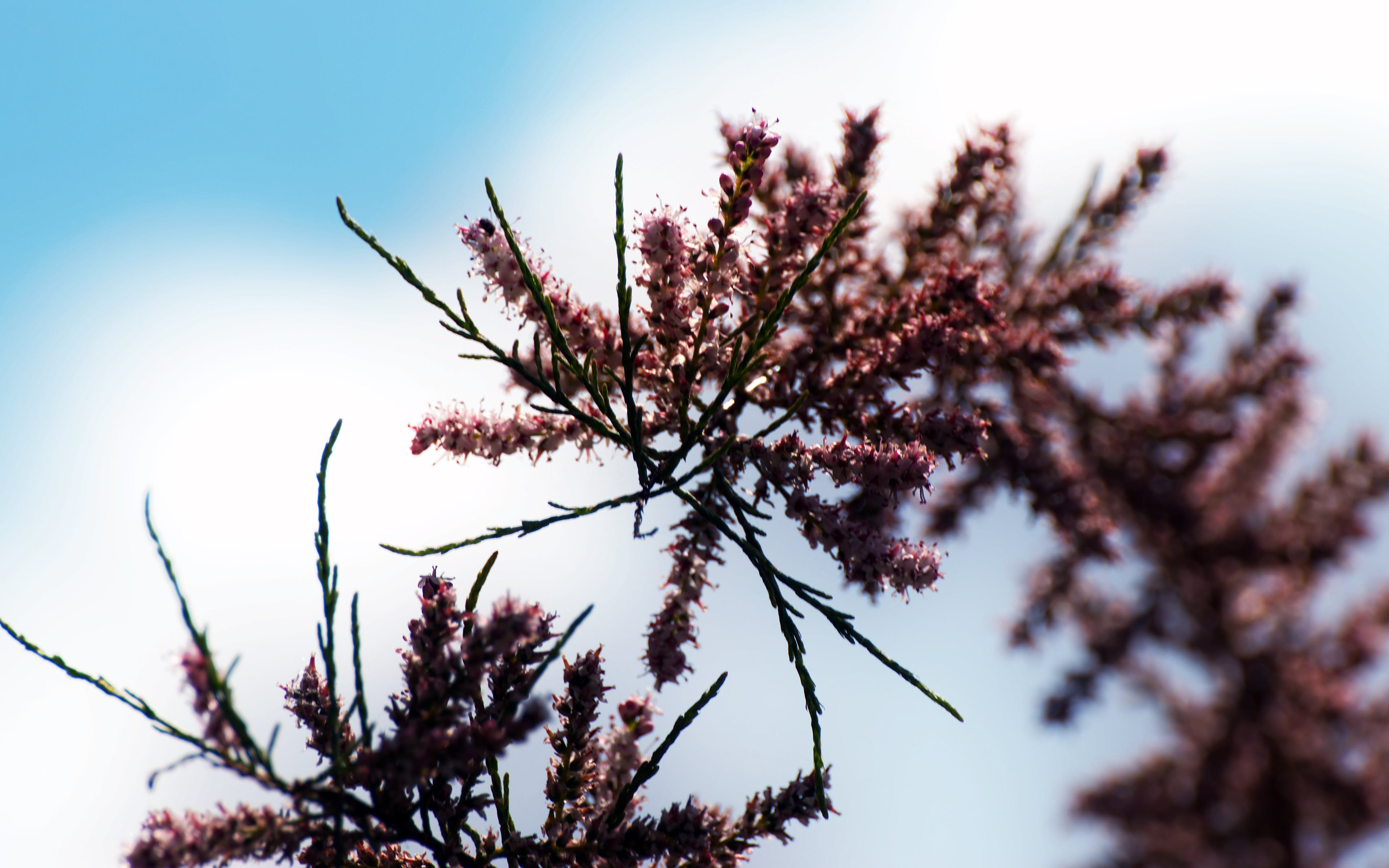Foto d'estoc gratuïta de arbre, branques d'arbres en flor, branquillons, cel