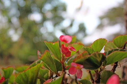 Foto profissional grátis de flor, natureza, tropical