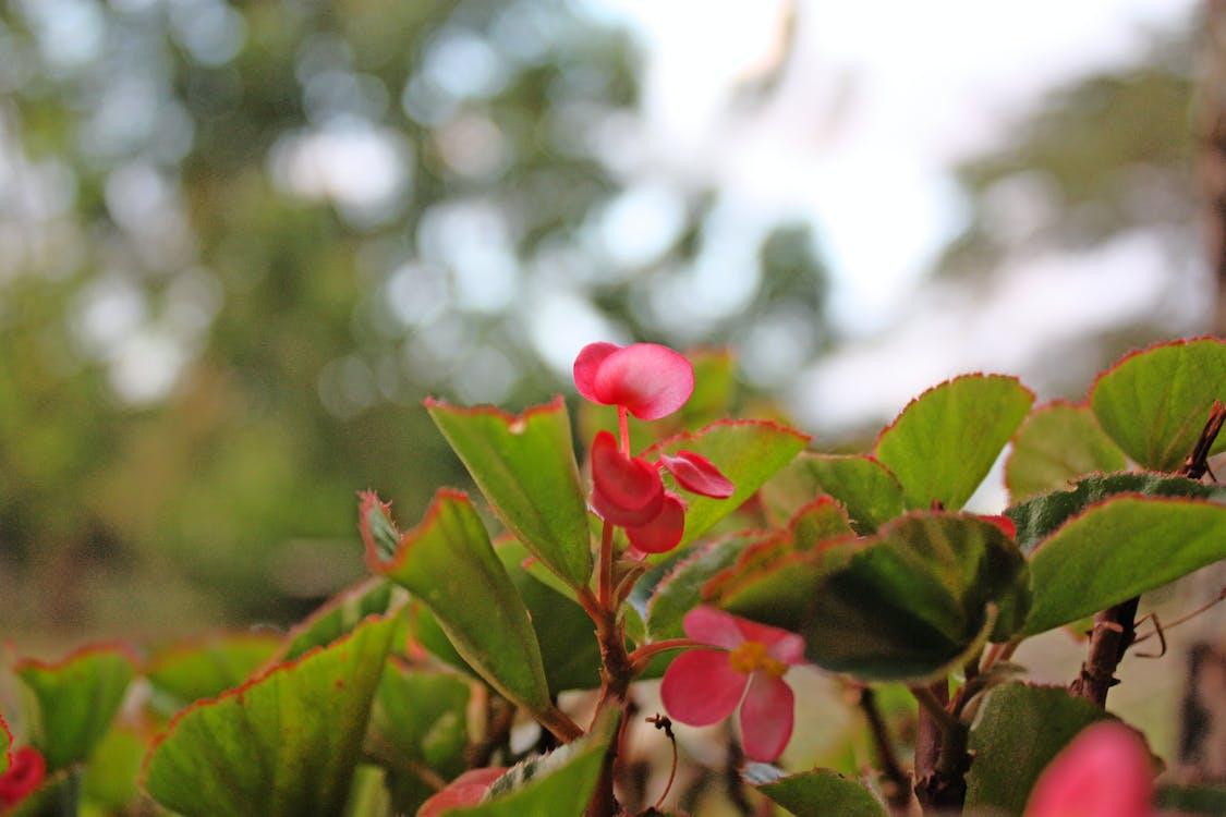 floare, natură, tropical