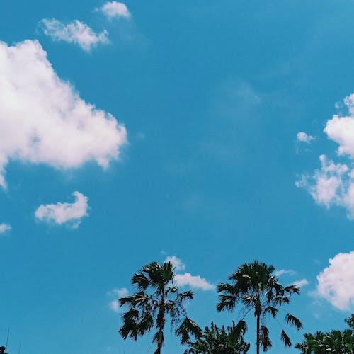 Fotos de stock gratuitas de azul, cielo, cielo azul, cielo limpio