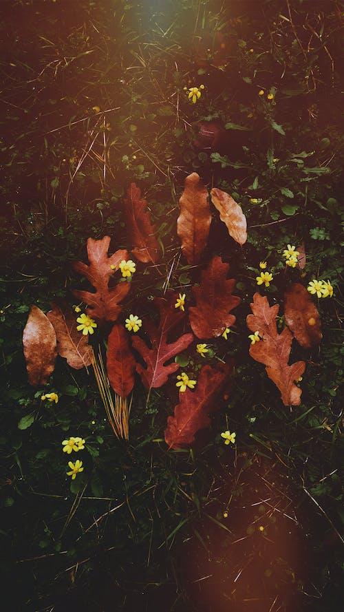 Základová fotografie zdarma na téma podzim