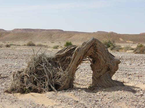 Immagine gratuita di albero, arco, deserto, fiume