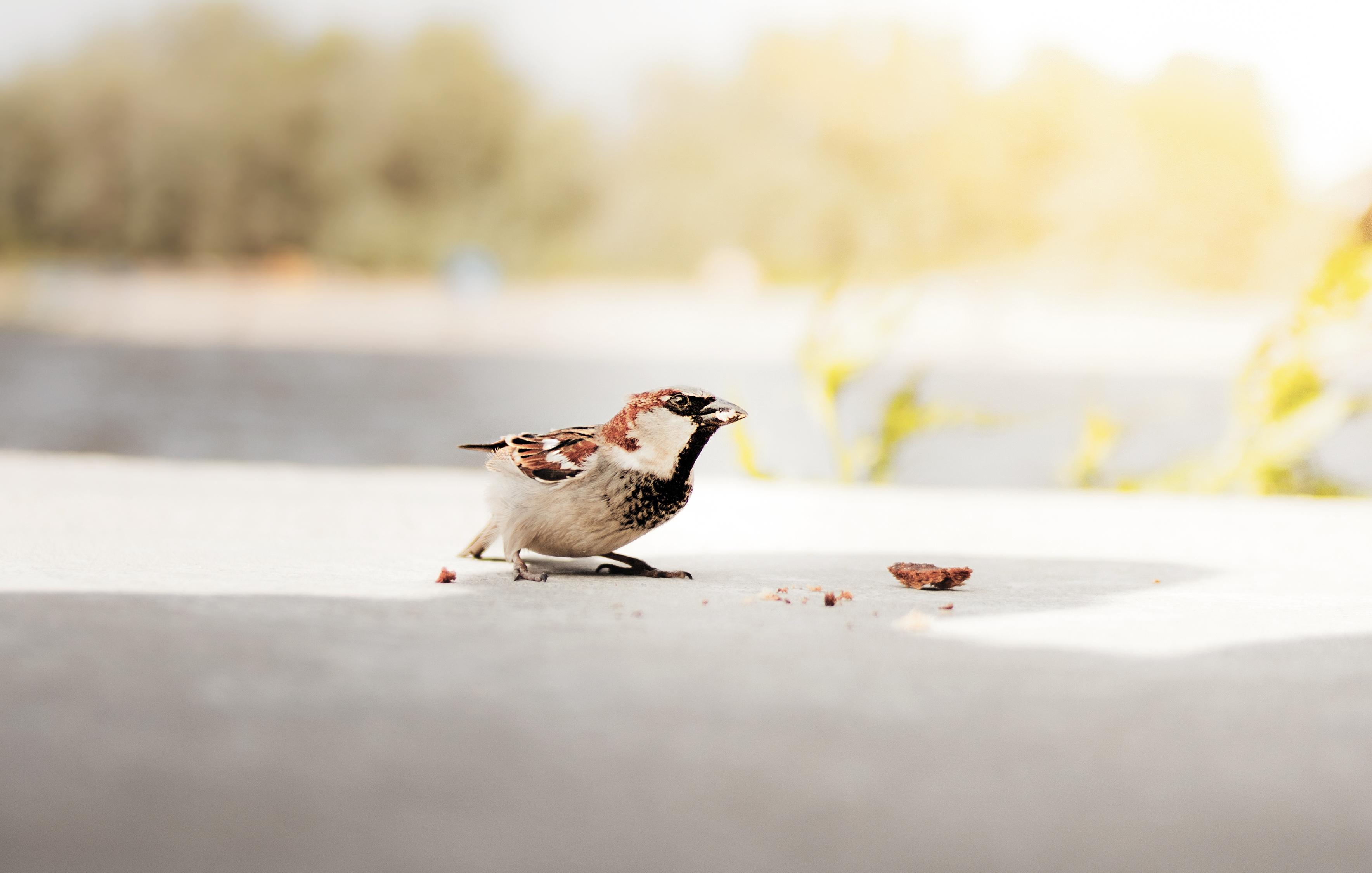 Fotky z veľkého vtáka