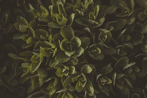 Green Leafy Plant