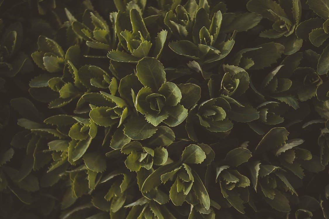 bladeren, bloemen, close-up