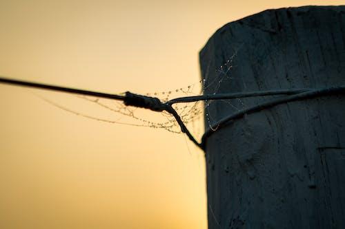 Fotos de stock gratuitas de araña, telaarañas, troncos, webs